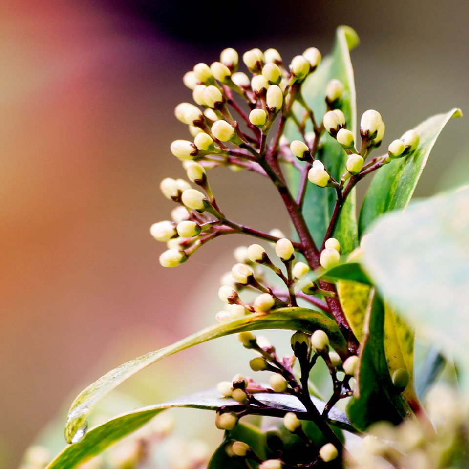 Asia - wiosna