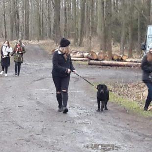 Spacer z psem – niezawodny!